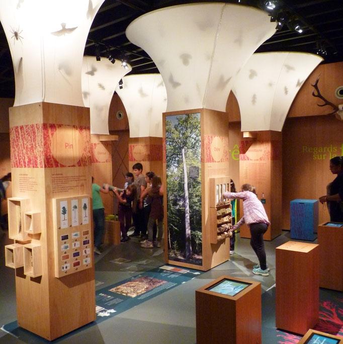 Musée du bois à Jupilles