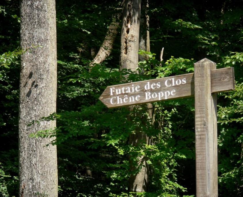La forêt légendaire de Bercé